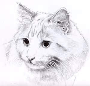 cat sketches pencil cat portrait by kingzoidlord on deviantart