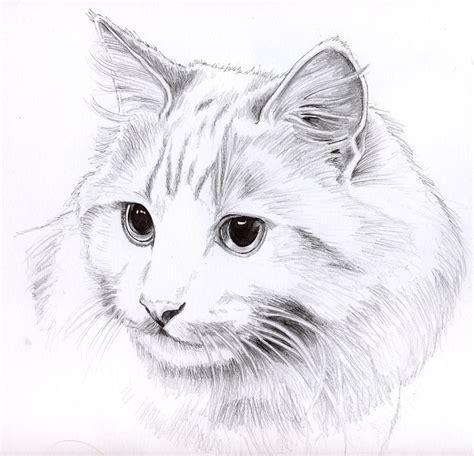 Pencil Drawings Pencil Drawings Of Cats