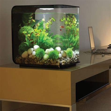 small fish tank aquarium