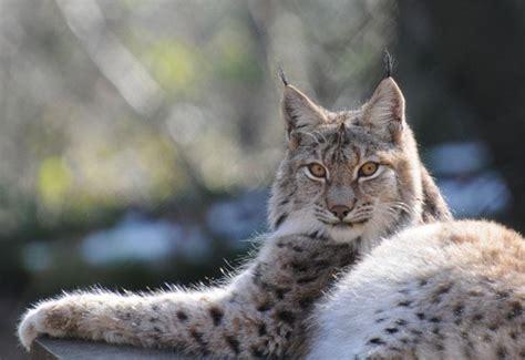 animales del bosque  sus caracteristicas  imagenes