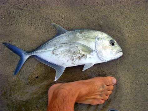 Name That Fish Surf Fishing In Hawaii Edition