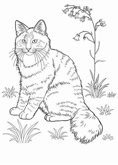 Coloring Cat Pages Adults Striped