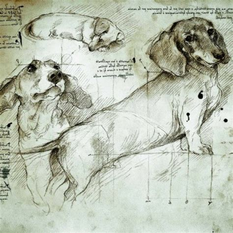 drawings  animals  famous artists