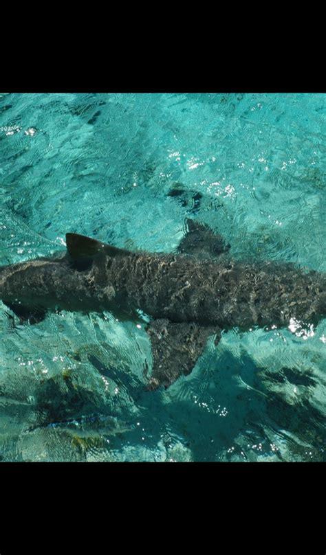 amazoncom cute shark wallpaper hd wallpapers  cute