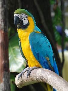 Fauna della Foresta amazzonica - Wikipedia