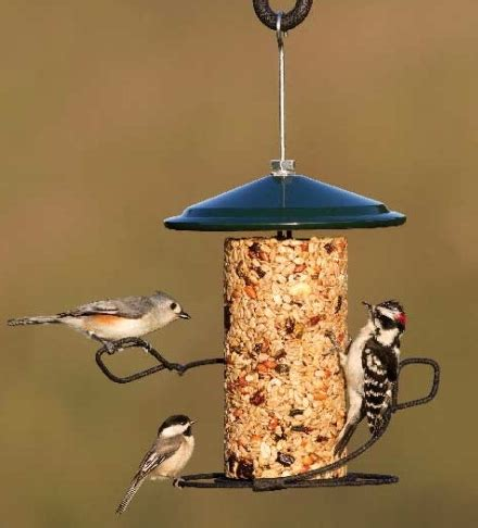birds unlimited bird feeders birds unlimited 7 tips to feeding birds in the summer