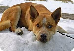 Scrappy | Adopted Dog | A18853988 | Cheyenne, WY ...