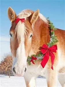 We wish you a Merry Christmas Valenti Equestrian Club