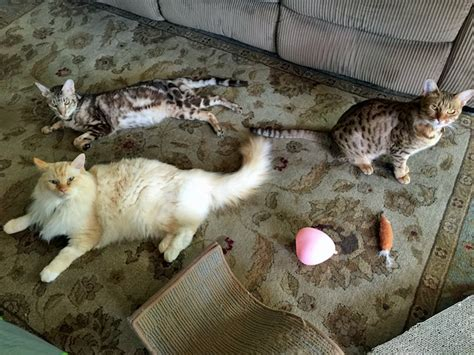how to euthanize a cat how we came to euthanize our diabetic cat pica