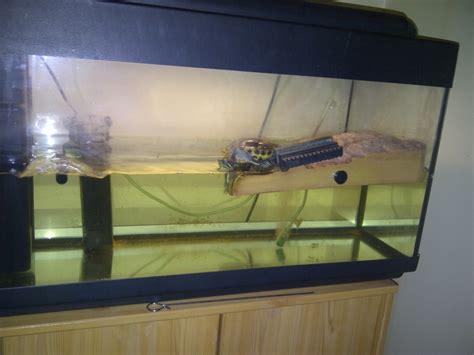 aquarium tortue de floride besoin d aide novice avec une tortue de floride