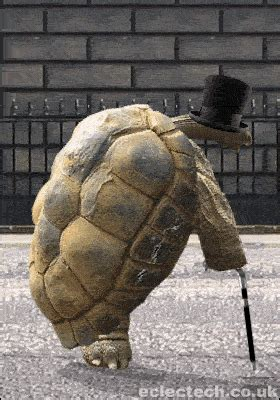 tortoise gif find share  giphy