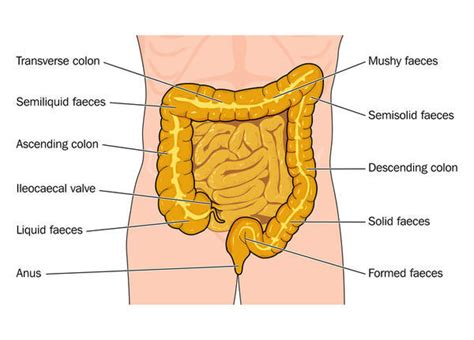 light colored stool and stomach pain looks like clay doctor answers