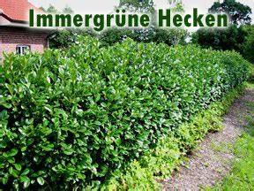 Sichtschutz Immergrün Winterhart : immergr ne hecken ~ Michelbontemps.com Haus und Dekorationen