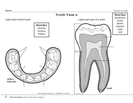 for dental health month a worksheet that requires