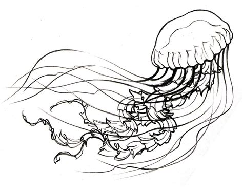 Simple Jellyfish Drawing At Getdrawingscom Free For