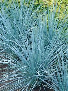 Ornamental Grass Gardens Ideas