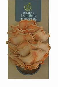 Kit Champignon  Pleurotes Rose Par Pret A Pousser