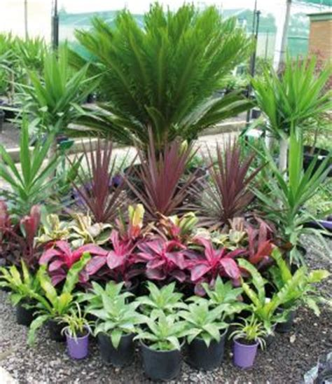 tropical garden bed tropical plants sago palm cordylines agaves plants pinterest tropical plants tropical