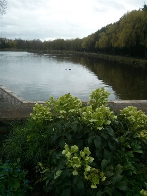 Cwmbran Boating Lake by Quot I Like Cwmbran Boating Lake Because Quot A Bit Of Fun