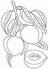 Peach Coloring sketch template