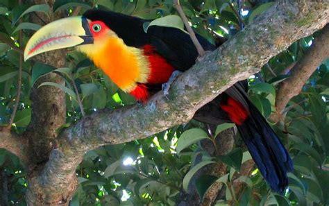 beste afbeeldingen  tropisch regenwoud op pinterest