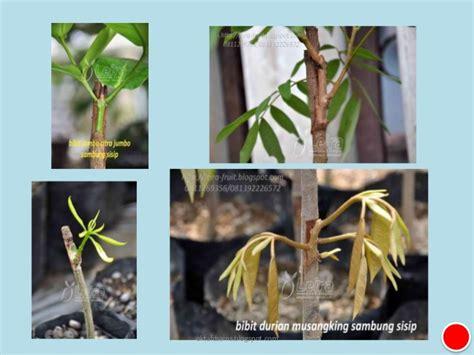 perkembangbiakan tumbuhan