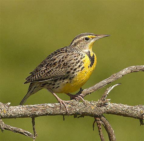 image gallery oregon birds
