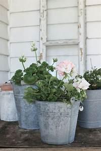 Blühende Zimmerpflanzen Pflegeleicht : ber ideen zu pflegeleichte zimmerpflanzen auf ~ Michelbontemps.com Haus und Dekorationen
