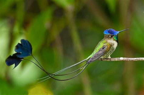 aves exoticas del peru peruinka intertravel
