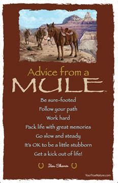 advice   mule grand canyon national park