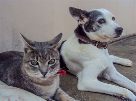 cats dogs better than cat dog reasons why