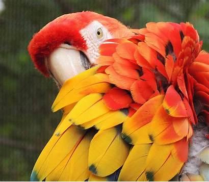 Exotic Bird Birds Pet Parrots Services Dierenarts