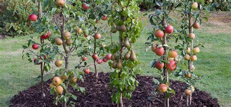 Kā izaudzēt veselīgus augļu kokus? - Gilius