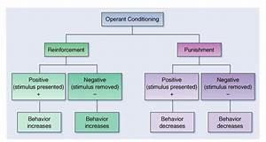 B F  Skinner Operant Conditioning Theory