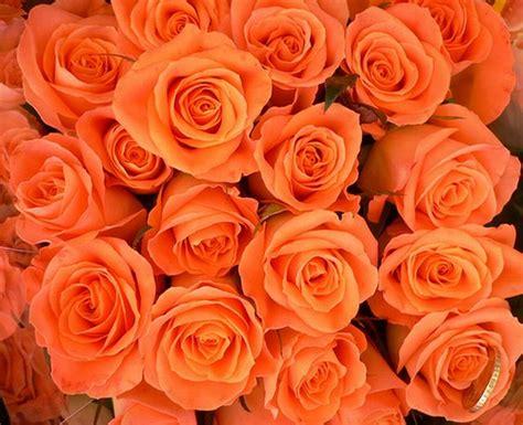 ควมหมายของดอกกุหลาบแต่ละสี: ความหมายของดอกกุหลาบ