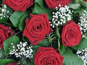 1 Rote Rose Bedeutung : kranz rote rosen schleierkraut f tschl blumen wien g rtnerei wien trauerfloristik kr nze ~ Whattoseeinmadrid.com Haus und Dekorationen
