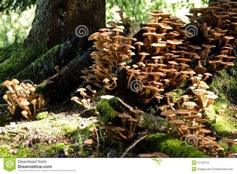 viele bücher wenig platz viele pilze in wenig platz stockbild bild strongest 21152113