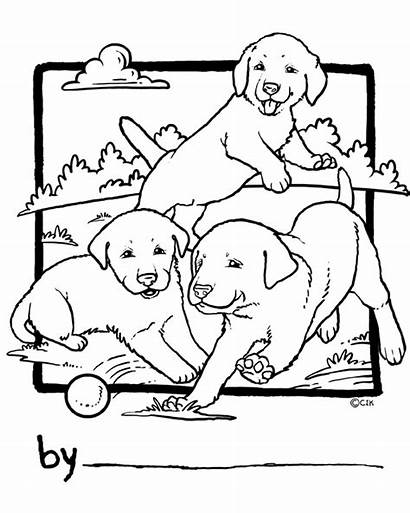 Coloring Lab Puppy Yellow Labrador Golden Dogs