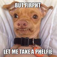 Stephen Funny Dog Memes