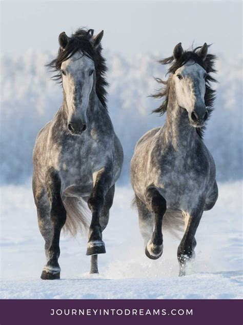 dream horse horses meaning means mean does animal spirit dictionary