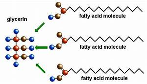 The Polymers  Monomers Of Lipids Are Fatty Acids And