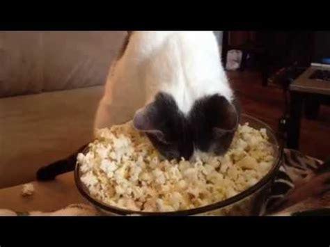 popcorn face warming cat youtube