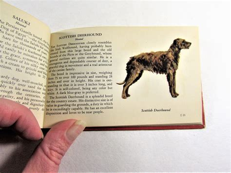 The Red Book Of Dogs Vintage Whitman Illustrated Book