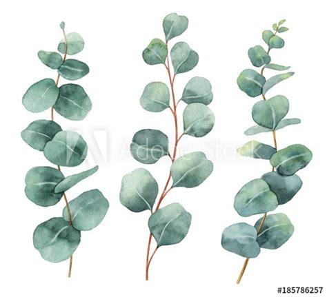 watercolor hand painted vector set  eucalyptus leaves