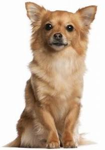 Tag For Small cute dog breeds with picture and name ...