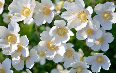 white flower pictures white flower plant 183 free photo on pixabay