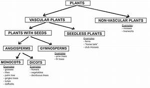 Classification Of Plants Vascular And Non