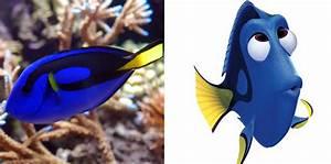 Real Fish Versus Finding Nemo Fish Whoa Oh My Disney