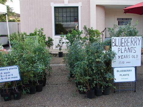 Olive Garden Lafayette Louisiana. Jordonne Johnson