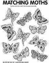 Moth Match Coloring Pages Crayola Printable Moths Crafts Butterflies Find Insect Christmas Matching Crayon Bugs Colors Print Adults Thanksgiving Worksheets sketch template